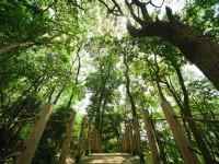 東森山林渡假酒店-生態