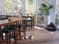 東森山林渡假酒店-貓餐廳「猫森」