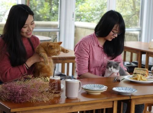 貓餐廳「猫森」