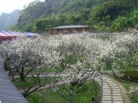梅林親水岸渡假村-戶外梅園