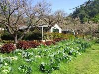 梅林親水岸渡假村-有機蔬菜園