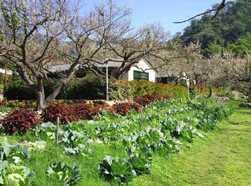 有機蔬菜園