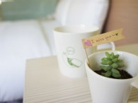 台中逢甲葉綠宿旅館-多肉植物
