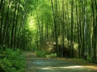 金台灣山莊-延溪竹林步道