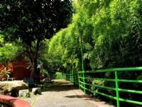 金台灣山莊-山莊木屋步道