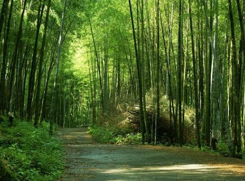延溪竹林步道