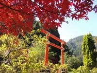 杉林溪森林生態渡假園區-秋季楓紅
