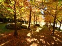 杉林溪森林生態渡假園區-水杉