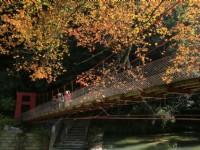 杉林溪森林生態渡假園區-九九吊橋