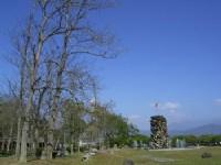 牛耳藝術渡假村-油桐林