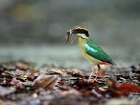 歐都納山野渡假村-八色鳥