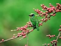 歐都納山野渡假村-五色鳥