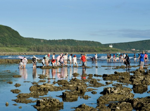 潮間帶生態導覽